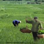 """Andrea Enrico Pia: Ritorno al villaggio. Società rurale, teoria politica e il dibattito sulla """"modernità"""" in Cina"""