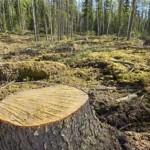 Bruno Giorgini: Gli alberi del mondo muoiono di fame, sete ed embolia