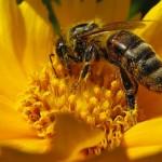 Ricken Patel (Avaaz): Enorme vittoria per le api