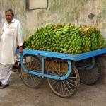 Vandana Shiva: I parassiti delle banane