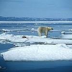 Ricken Patel (Avaaz): Si stanno sciogliendo i ghiacci del Polo Nord