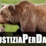 Giustizia per Daniza, l'orsa che voleva difendere i suoi cuccioli uccisa durante la sua cattura