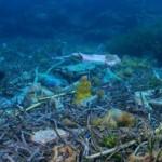 Roberto Dall'Olio: La plastica nel mare