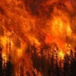 Roberto Dall'Olio: I roghi delle foreste