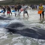 Legambiente: Una petizione per fermare l'airgun e salvare i cetacei