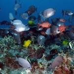 Vittorio Sabadin: Il rapporto Living Blue Planet. Allarme oceani