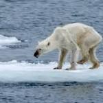 Roberto Dall'Olio: L'agonia degli orsi polari
