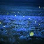 Roberto Dall'Olio: Le lucciole di Pasolini