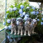 Maria Pace Nemola: Giardini, giardini, dal giardino dell'Eden al giardino dei miei cani