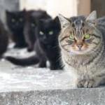 Roberto Dall'Olio: I gatti di Pacho