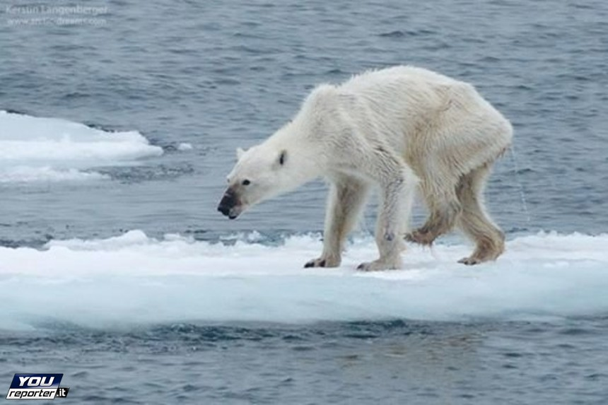 Roberto Dall'Olio: In nome dell'Artico