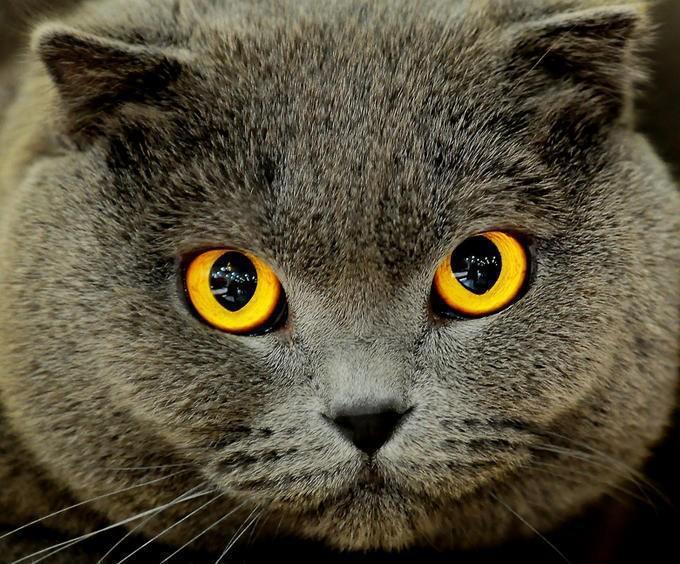 Miguel Angel Garcia: I lavori del gatto Arnulfo. Una storia d'amore e di morte su i tetti di Buenos Aires