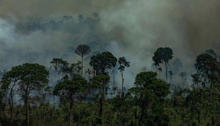 Roberto Dall'Olio: Amazzonia. La foresta brucia