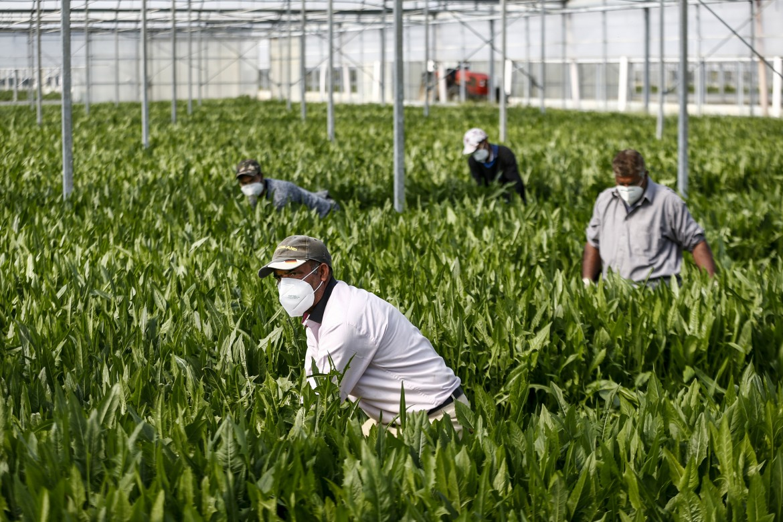 Enrico Pugliese: L'agricoltura non è solo questione di frutta e verdura