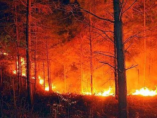 Roberto Dall'Olio: Poesia sulla foresta amazzonica divorata dalle fiamme