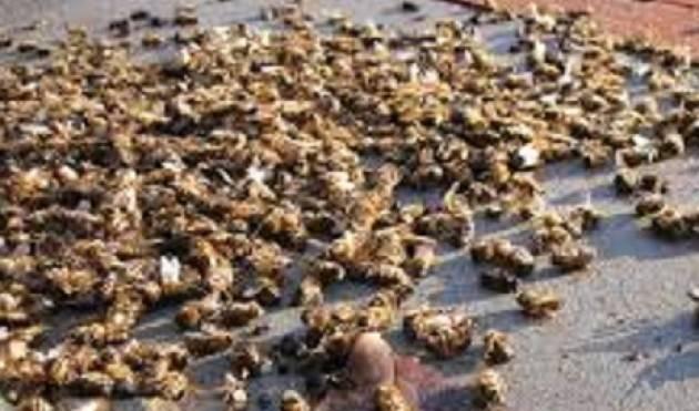 Roberto Dall'Olio: Moria di api in Lombardia