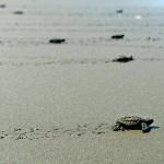 Roberto Dall'Olio: 31 maggio a Playa Moin in Costarica